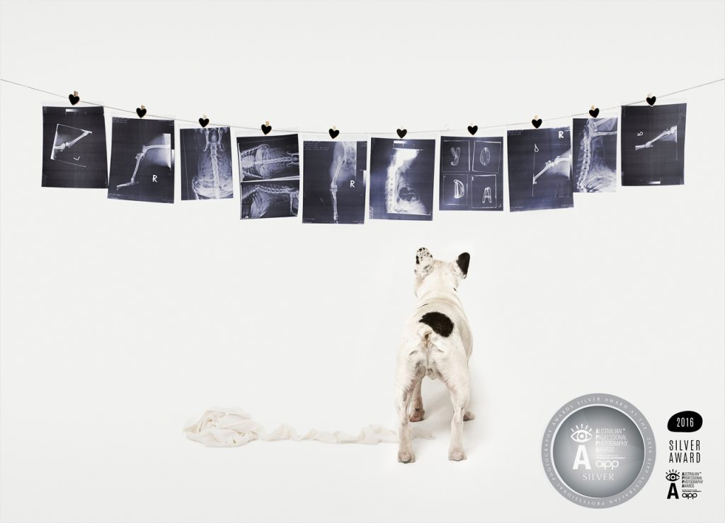 Awards-Jo-Howell-Pet-Photography020