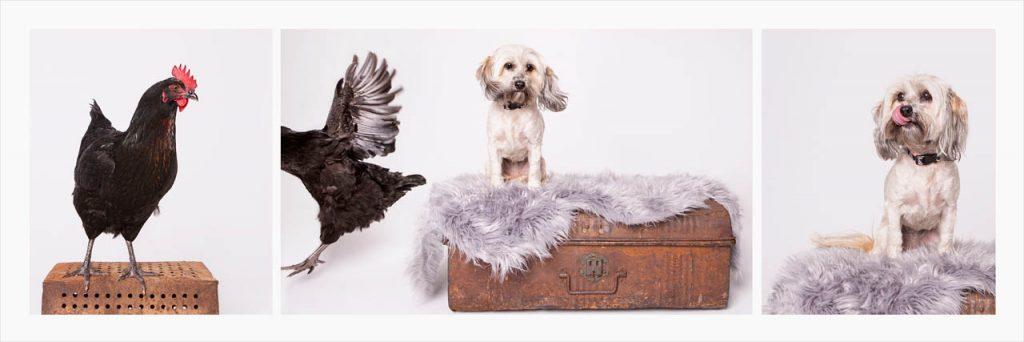 Jo Howell Pet Photography Birds116