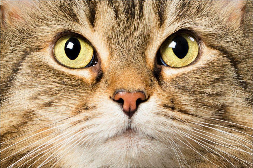 Jo Howell Pet Photography Cats101