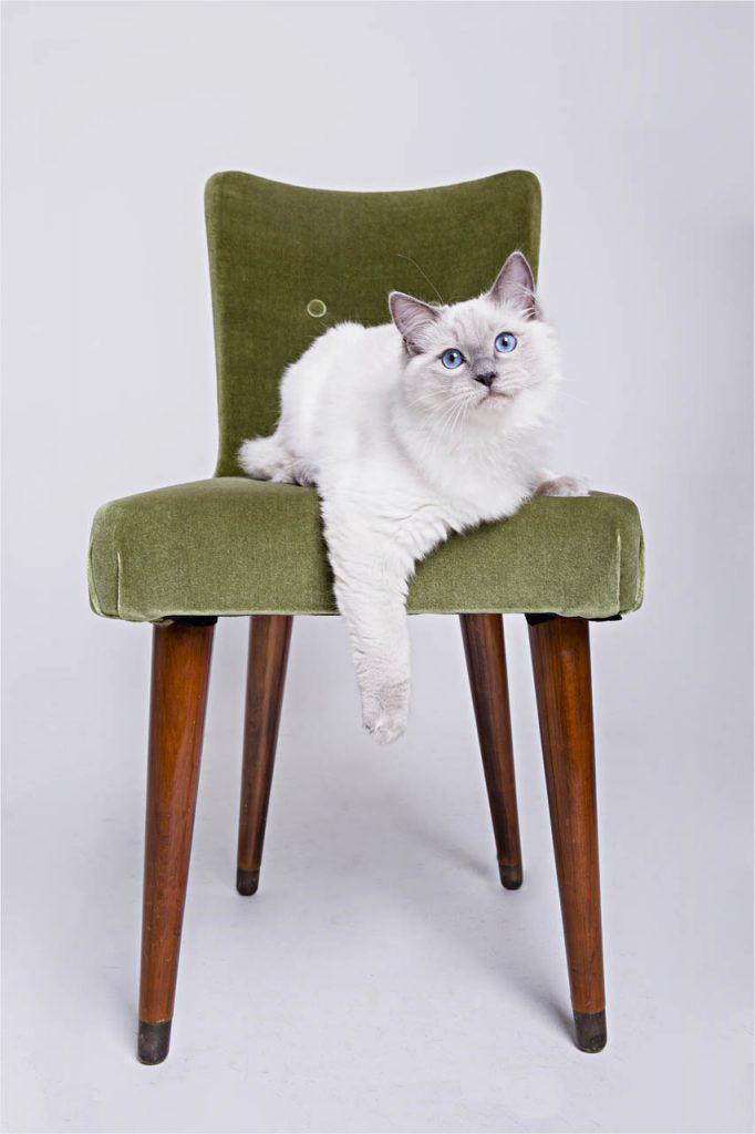 Jo Howell Pet Photography Cats103