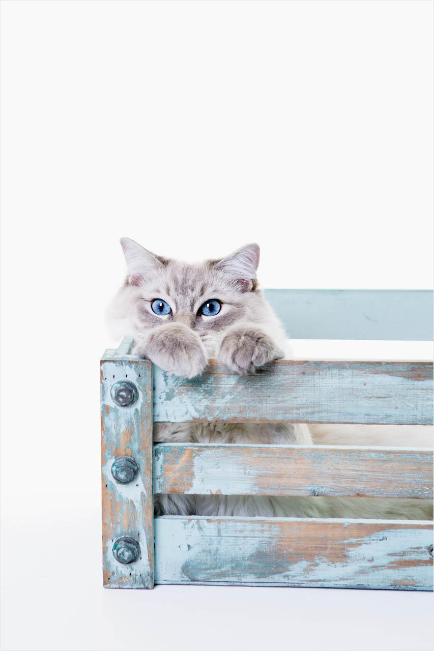 Jo Howell Pet Photography Cats104