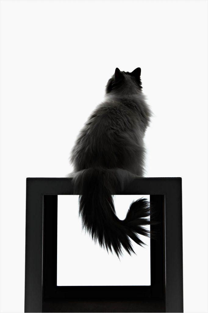 Jo Howell Pet Photography Cats106