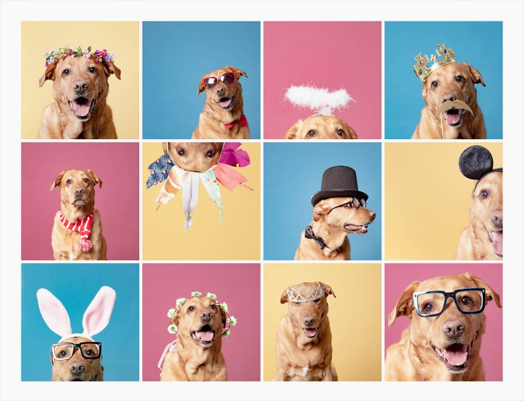 Jo Howell Pet Photography Colours101