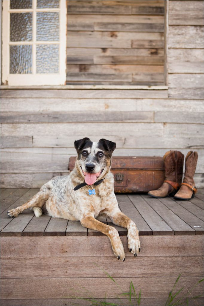 Jo Howell Pet Photography Cubby House109