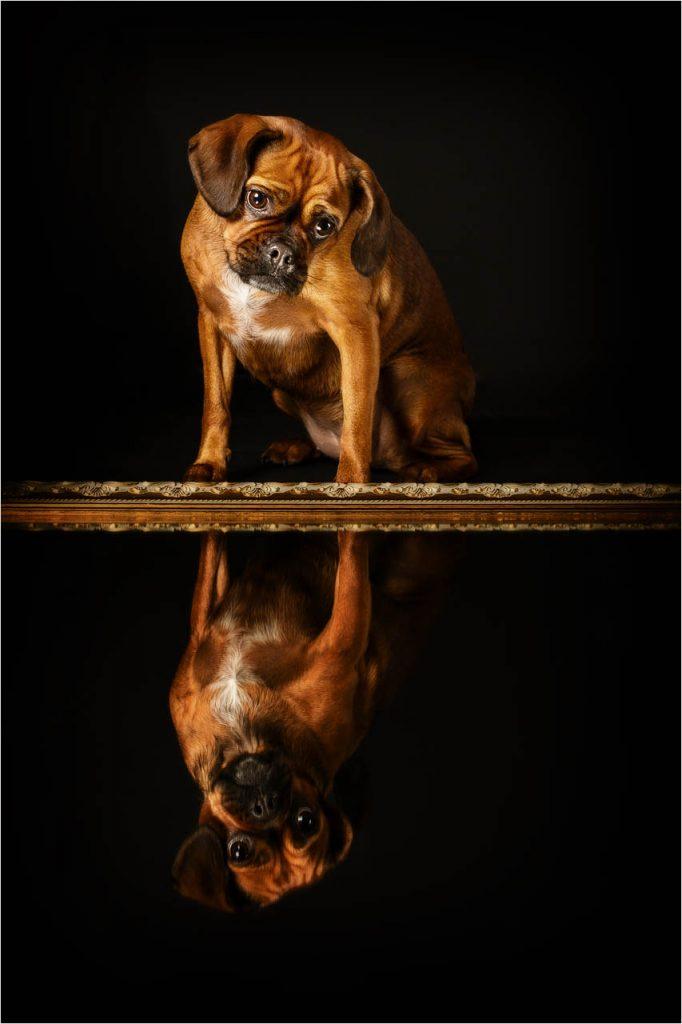 Jo Howell Pet Photography Dogs Black101