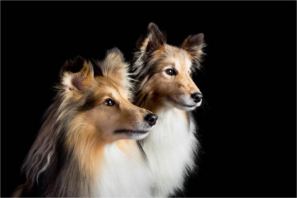 Jo Howell Pet Photography Dogs Black102