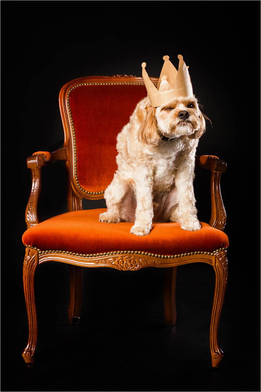 Jo Howell Pet Photography Dogs Black103