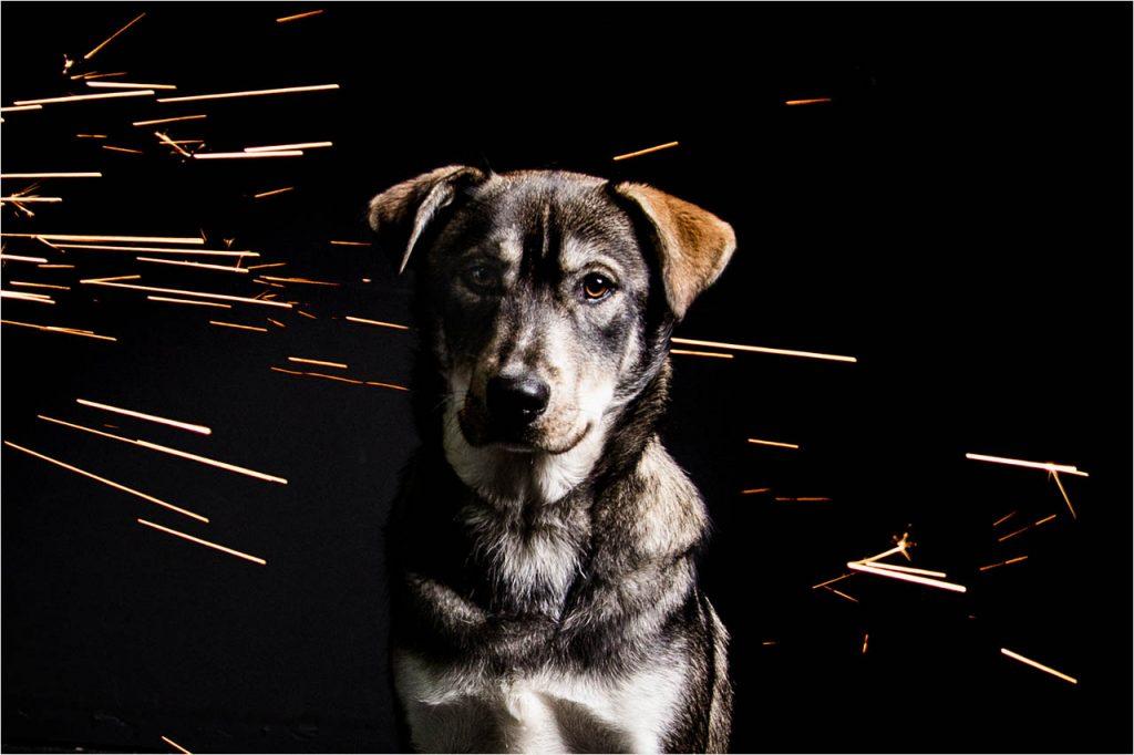 Jo Howell Pet Photography Dogs Black105