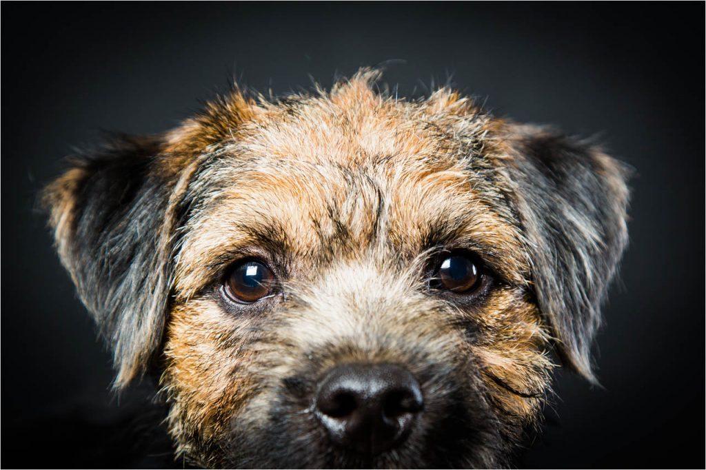 Jo Howell Pet Photography Dogs Black107