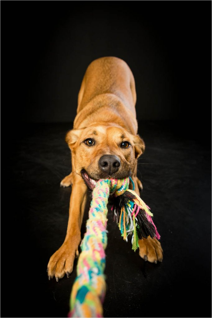 Jo Howell Pet Photography Dogs Black108
