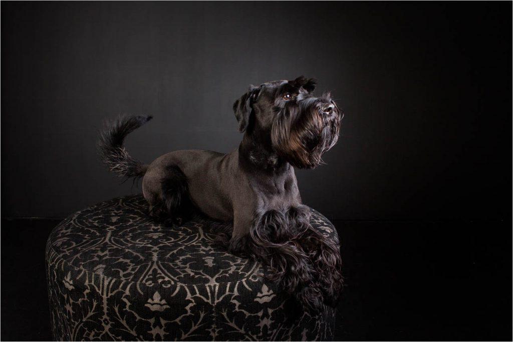 Jo Howell Pet Photography Dogs Black110