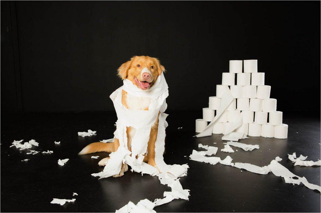 Jo Howell Pet Photography Dogs Black111