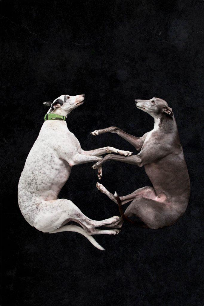Jo Howell Pet Photography Dogs Black112