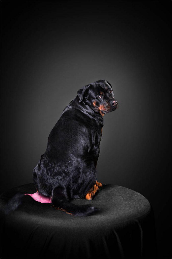 Jo Howell Pet Photography Dogs Black119