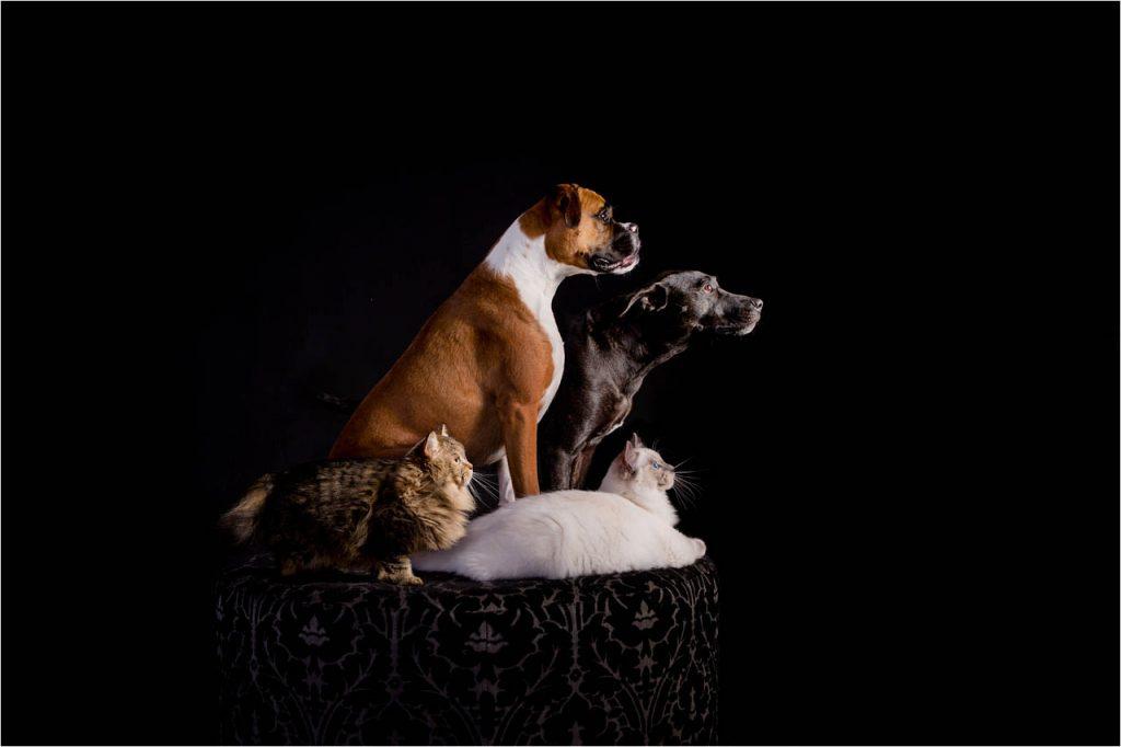 Jo Howell Pet Photography Dogs Black120