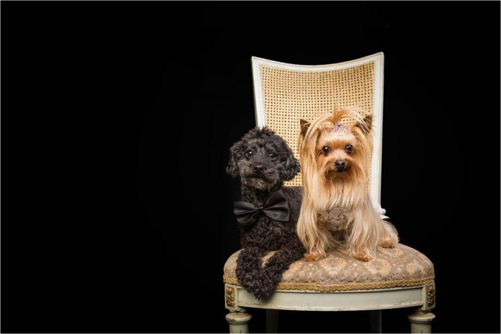 Jo Howell Pet Photography Dogs Black123