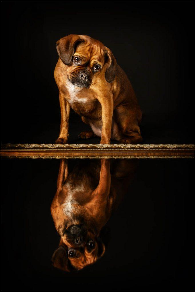 Jo Howell Pet Photography Dogs Black124