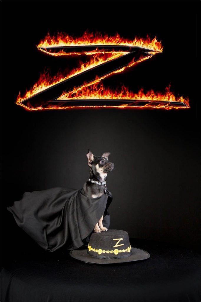 Jo Howell Pet Photography Dogs Black125