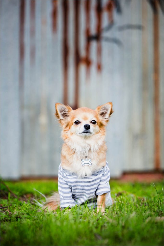 Jo Howell Pet Photography Dogs Outdoors302
