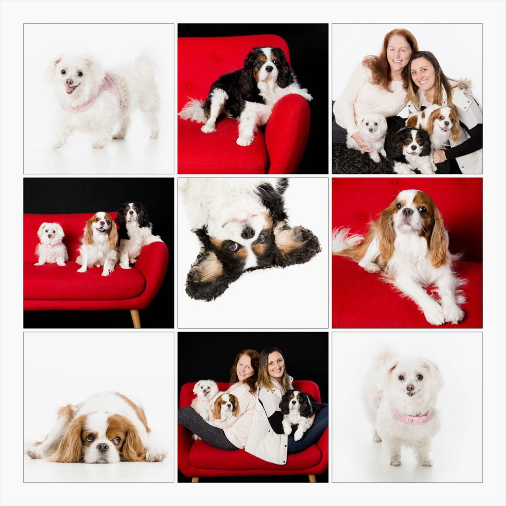 Jo Howell Pet Photography Dogs White102