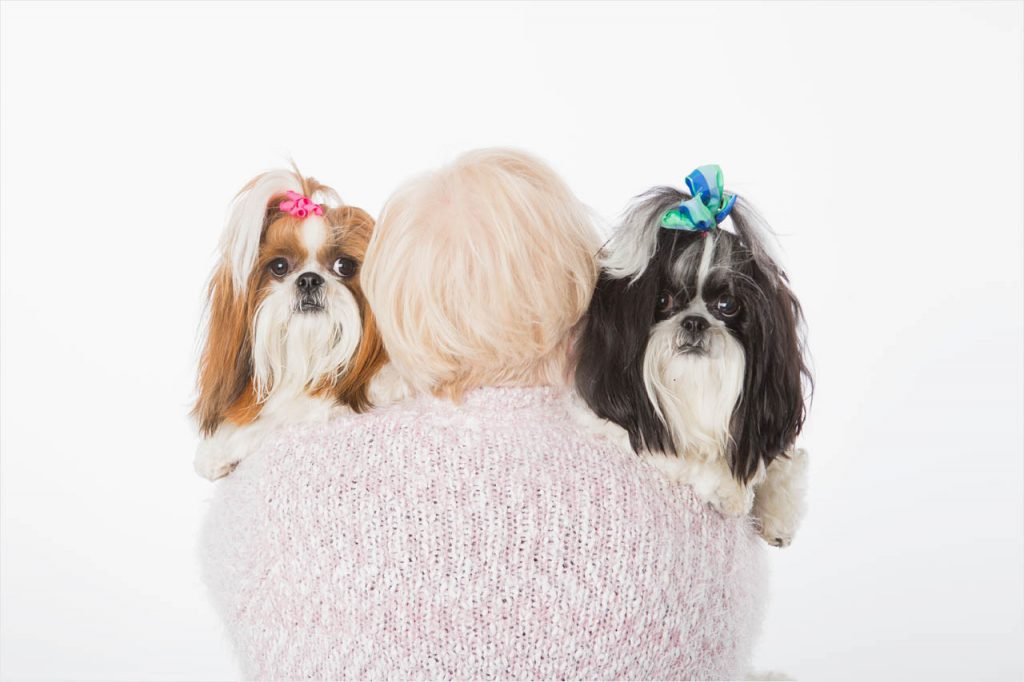 Jo Howell Pet Photography Dogs White109