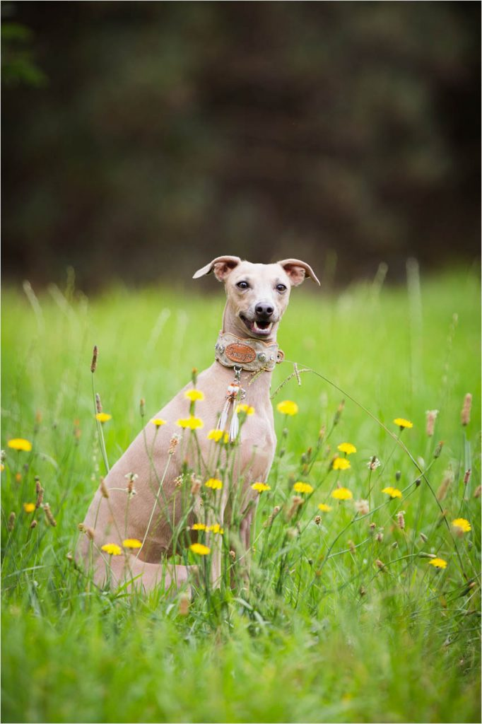 Jo Howell Pet Photography Grass is Greener102