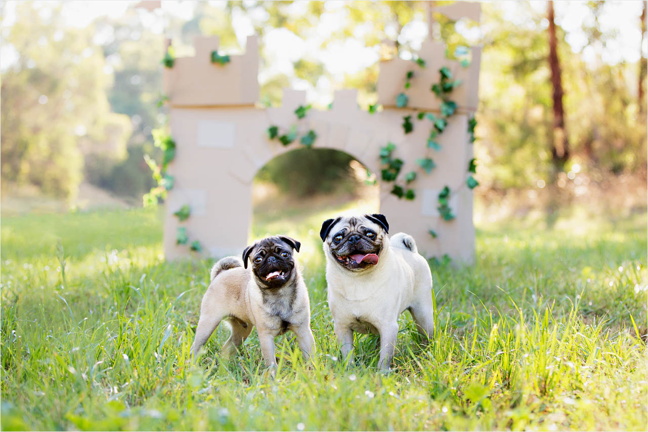 Jo Howell Pet Photography Grass is Greener111