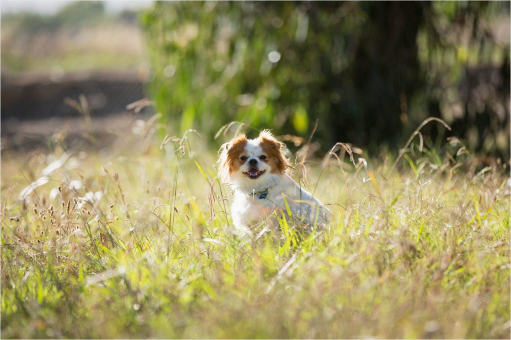Jo Howell Pet Photography Grass is Greener112