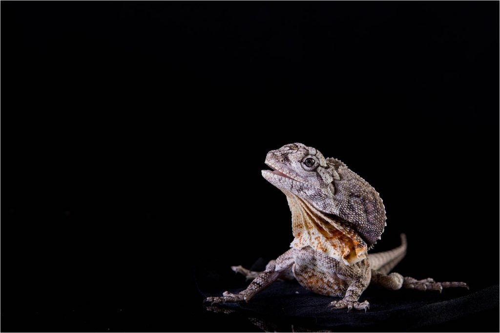 Jo Howell Pet Photography Reptiles113