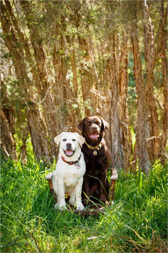 Jo Howell Pet Photography Secret Garden118