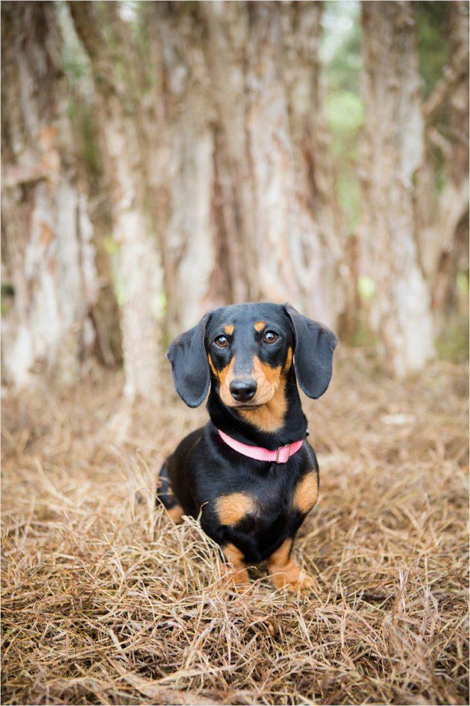 Jo Howell Pet Photography Secret Garden119