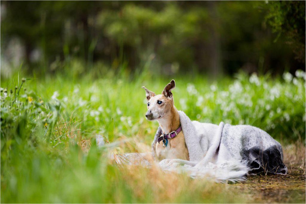 Jo Howell Pet Photography Secret Garden120