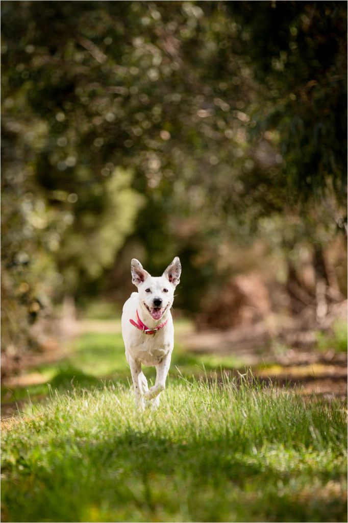 Jo Howell Pet Photography country lane104