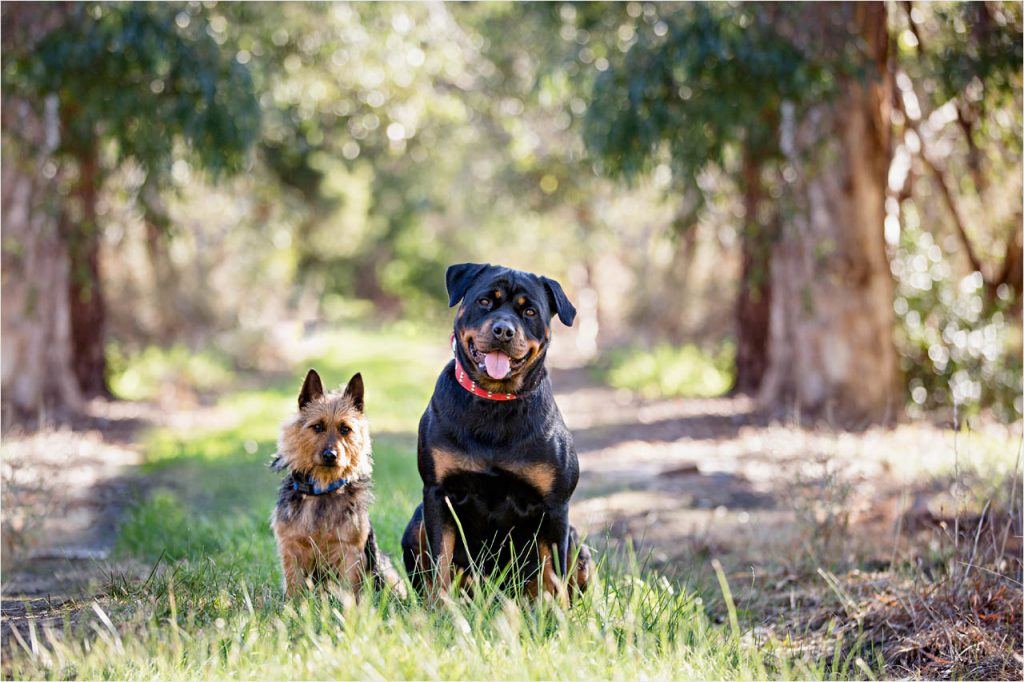 Jo Howell Pet Photography country lane105