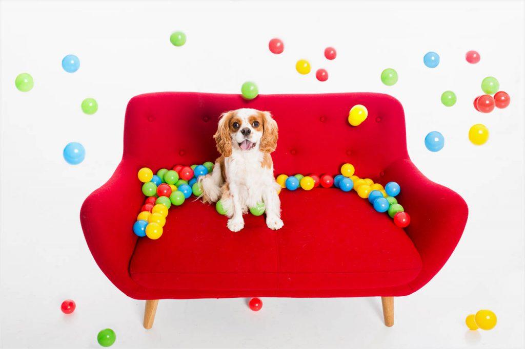 Jo Howell Pet Photography dogd white201