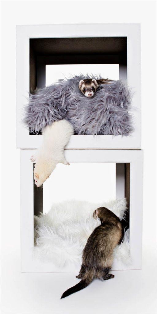 Jo Howell Pet Photography ferrets109