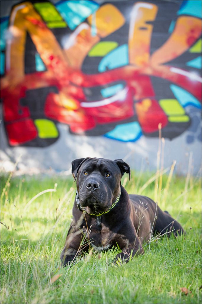 Jo Howell Pet Photography graffiti102