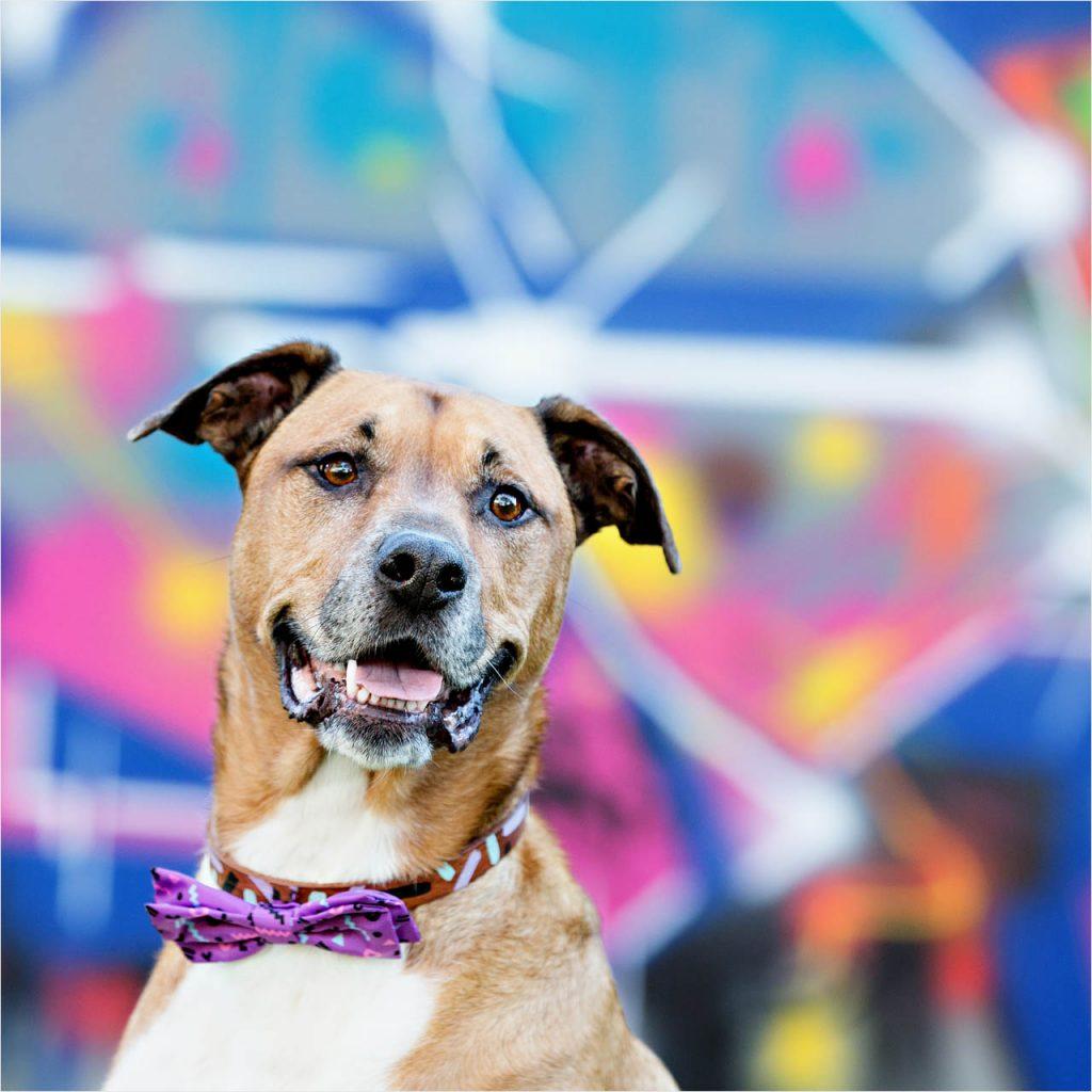Jo Howell Pet Photography graffiti103