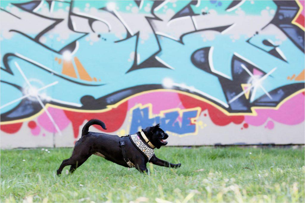 Jo Howell Pet Photography graffiti104