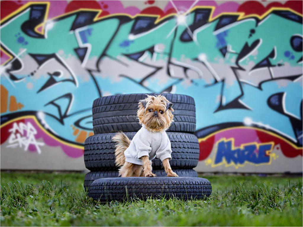Jo Howell Pet Photography graffiti105