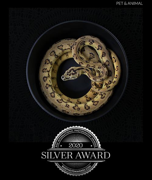 JHowell_snake bowl_certificate