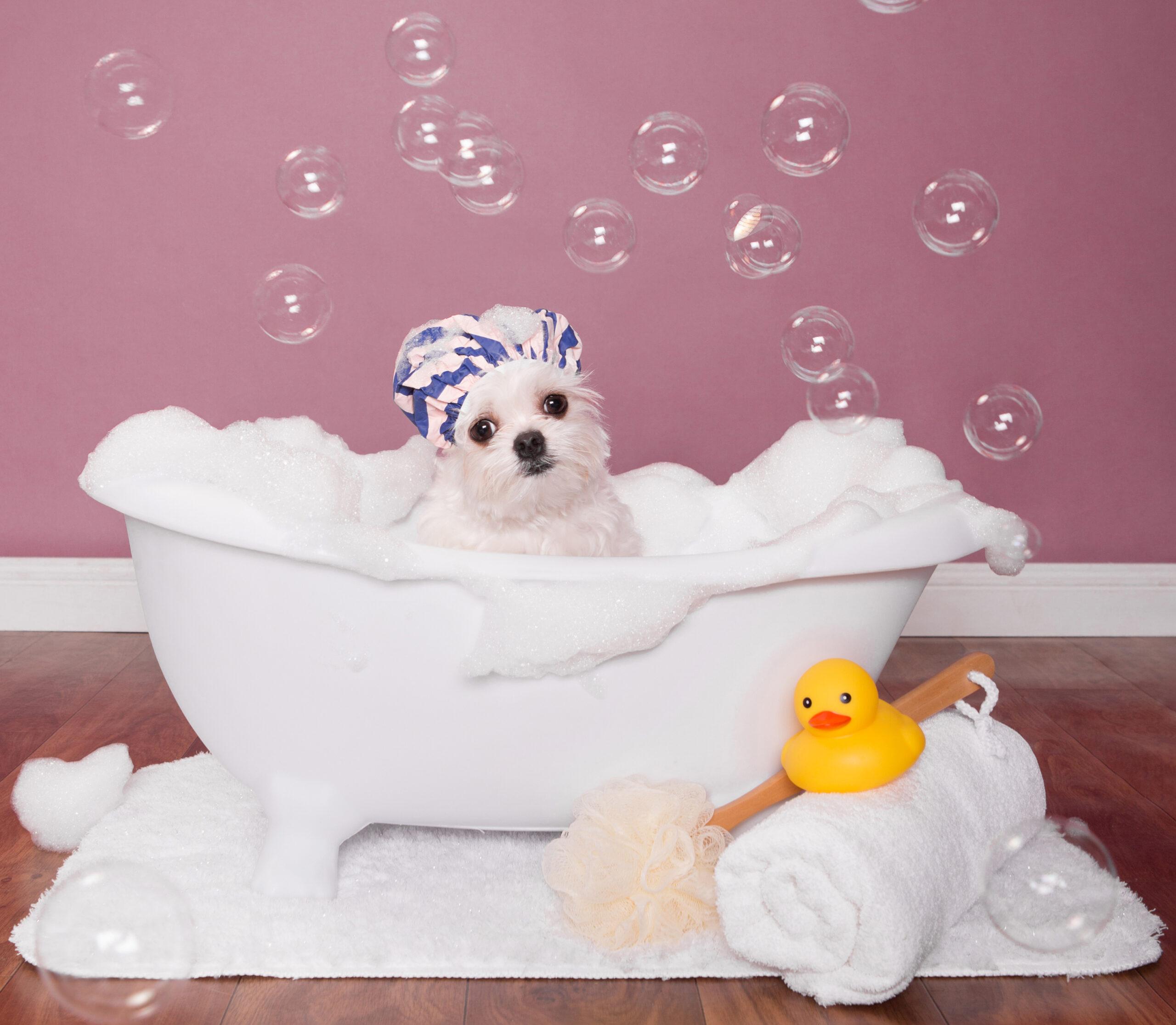 Dog in bathtub