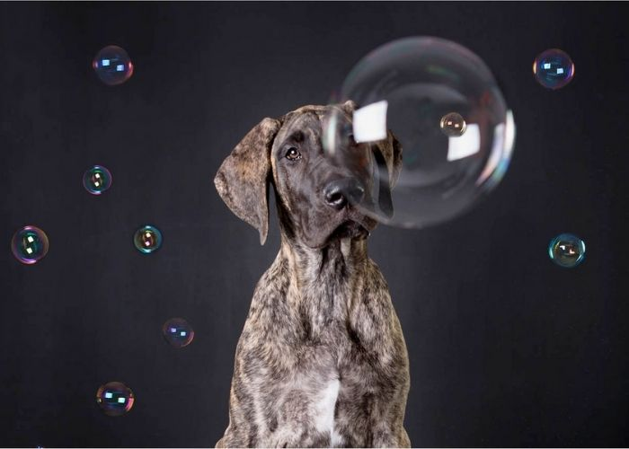 Capture Your Pets True Personality with Professional Pet Photography