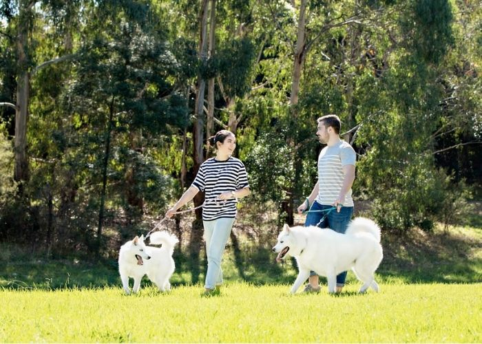 Pet Photography with Family Melbourne