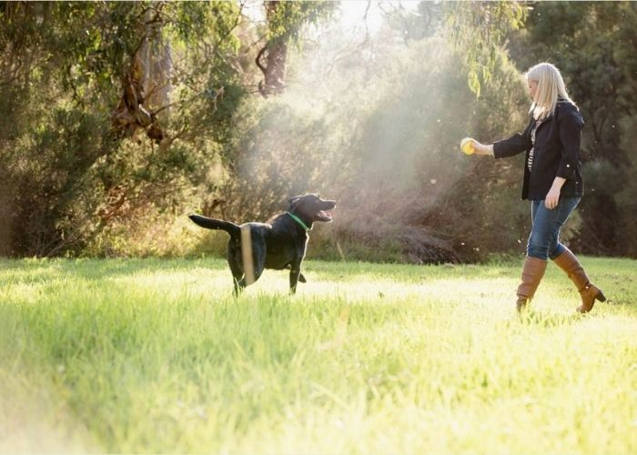 Outdoor Professional Pet Photography Melbourne