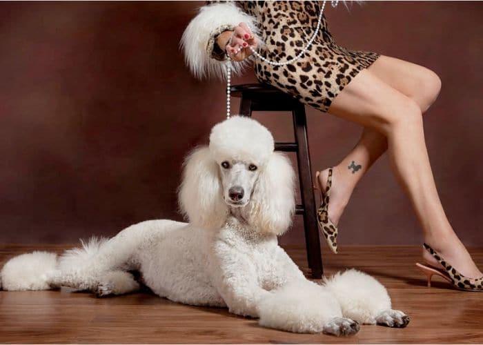 Professional Dog Photography Melbourne